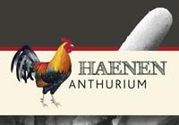 Haenen Anthurium