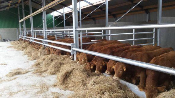 21 september 2017 – Bedrijfsbezoek Vleesveebedrijf Jan Aerdts met BBQ