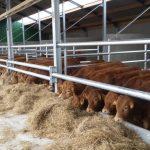 Verslag bezoek Vleesveebedrijf Jan Aerdts